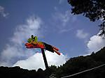 Flying_rabit_2